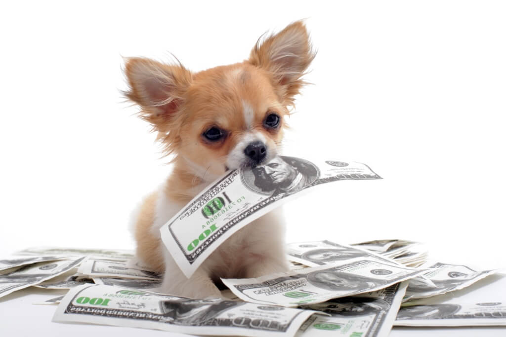 Taking Care Of Dogs Will Help You Make Money