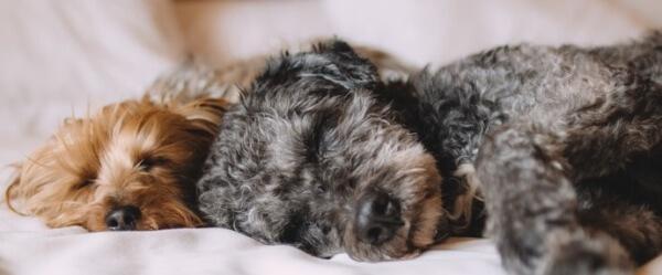 Dog care business - sleeping dogs