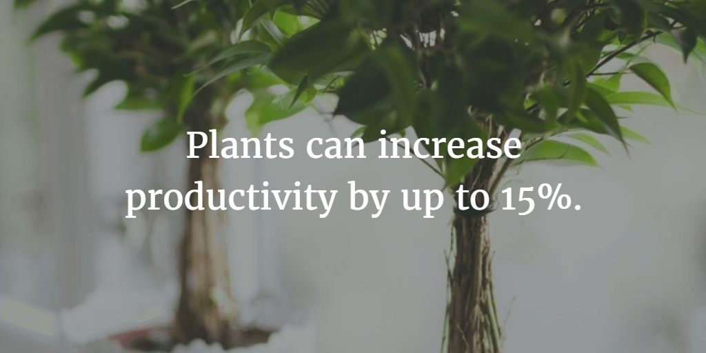 Plants can help increase productivity